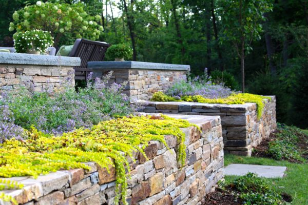 Madlinger Exterior Design close up of stone walls with stone seat wall surrounded with plantings creeping over wall in Basking Ridge New Jersey-min