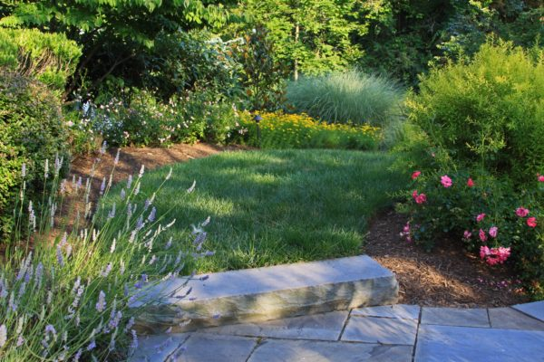Madlinger Exterior Design lush plantings with a bluestone slab step and bluestone walkway in bridgewater new jersey-min