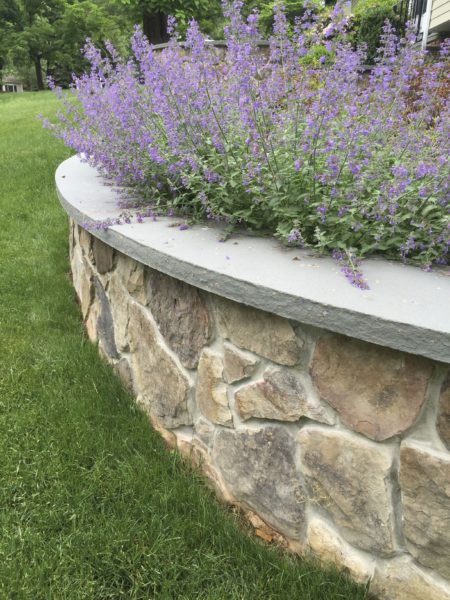 Madlinger Exterior Design natural stone retaining wall with curved bluestone cap thermal in basking ridge new jersey-min