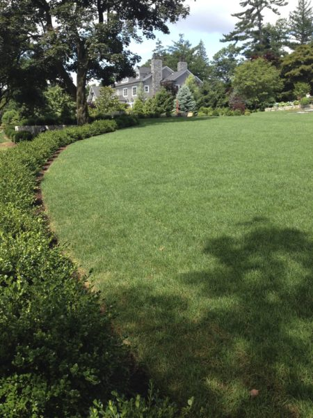 Madlinger Exterior Design newly sodded lawn and plantings in basking ridge new jersey-min