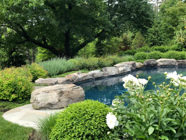 Lush poolscape by Madlinger Exterior Design LLC in Basking Ridge, NJ